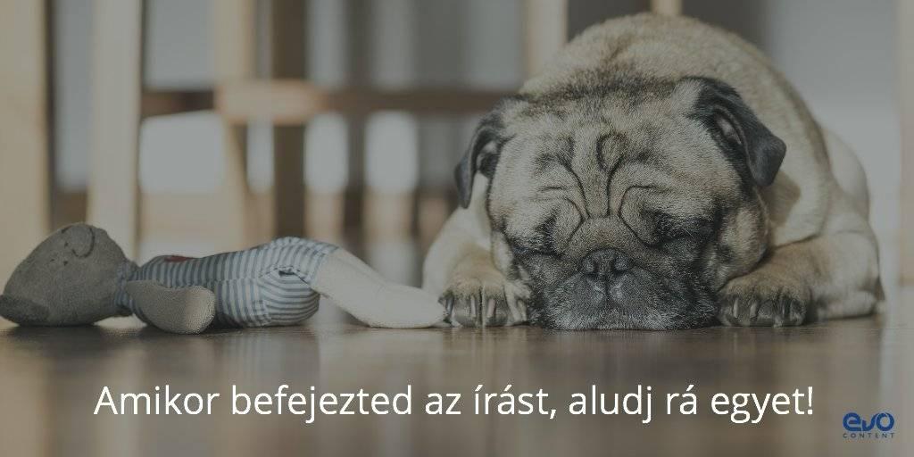 Kutya alszik: te is a aludj egyet az elkészült blogcikkre