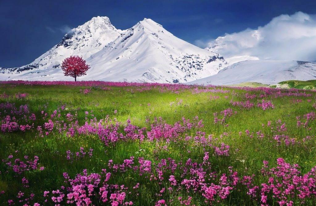Havas hegy előtt virágos rét